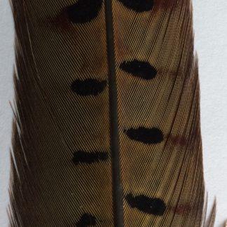 plume de faisan montage mouche